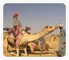 Camel Ride on Sand Dunes