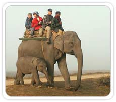 Elephant Safari at Kanha National Park